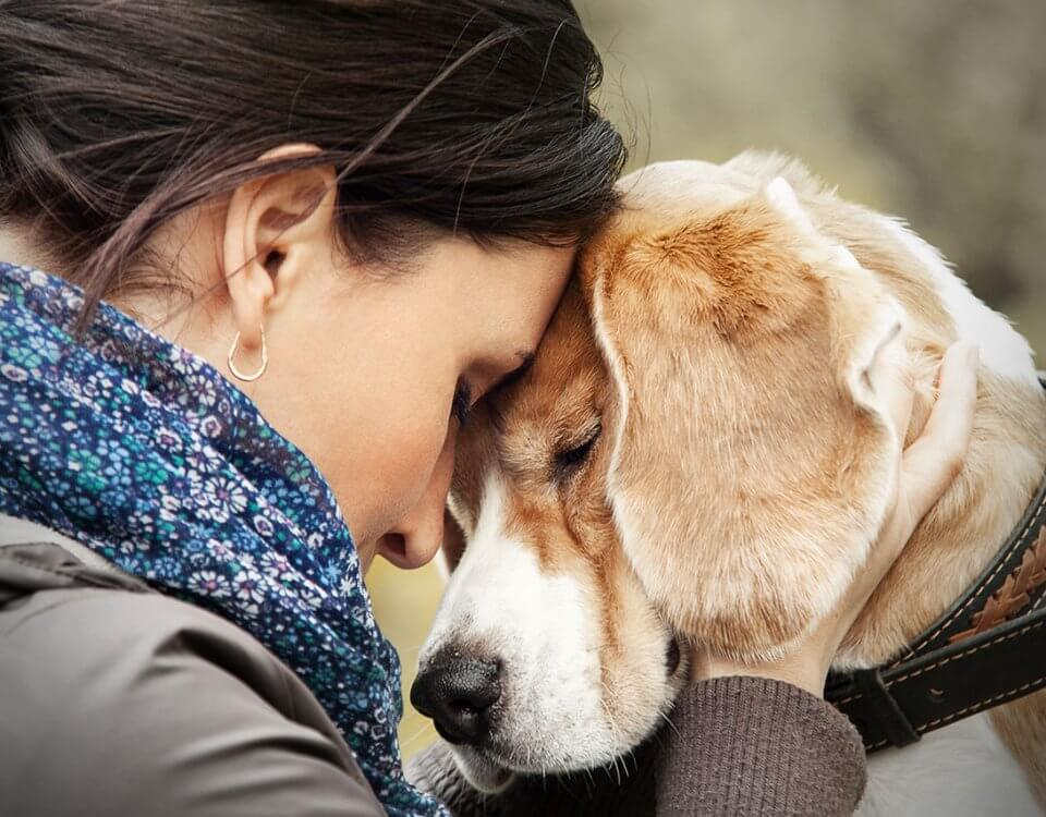 pet therapy treat mental illness